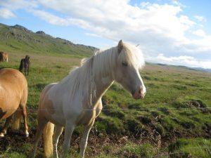 Þórheiður
