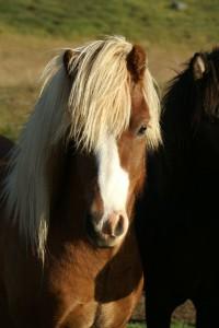 Freyþór